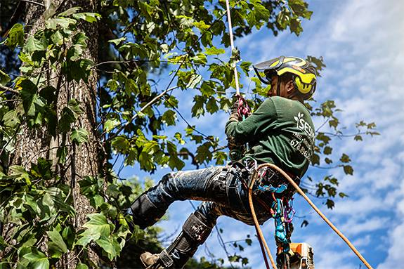 Tree Service in Lawrenceville